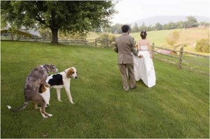 funny-weddings-03